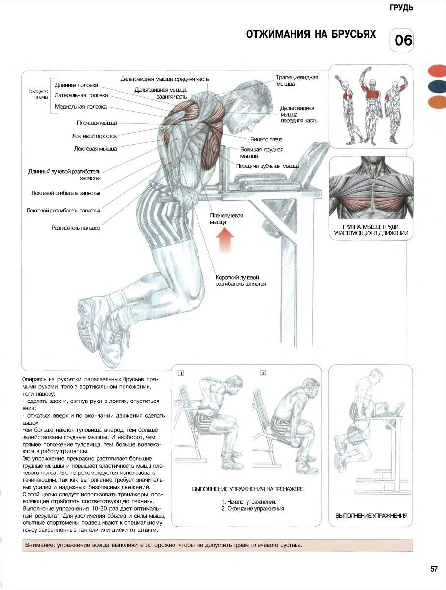 Мышцы груди упражнения 18 фотография