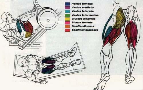 бедренный комплекс мышц,